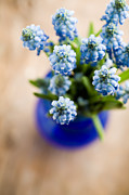 White Grape Photos - Muscari by Kati Molin