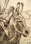 Donkey Drawings Prints - Oatman Burro Print by Lessandra Grimley