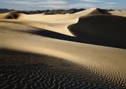 Oceano Dunes Print by Sharon Foster