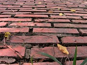 Burned Clay Photo Prints - Old Red Brick Road Print by Yali Shi