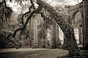 Live Oak Tree Prints - Old Sheldon Church Ruins Print by Dustin K Ryan