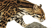 Wild Cats Framed Prints - On Target Ocelot Framed Print by Pat Erickson