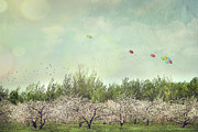 Countryside Art - Orchard of apple blossoming tees by Sandra Cunningham