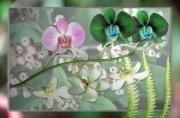 Collage Pyrography Framed Prints - Orchid Montage Framed Print by Richard Nickson