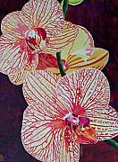 Terry Holliday - Orchids