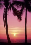 Darken Posters - Palms Against Pink Sunset Poster by Carl Shaneff - Printscapes