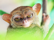 Alien Bug Photos - Phillipine tarsier by MotHaiBaPhoto Prints