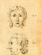 Folk Arts Posters - Physiognomical Illustration Of Human Poster by Science Source