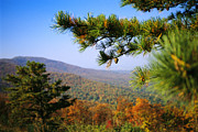 Autumn Scenes Photos - Pine Tree And Forested Ridges by Raymond Gehman