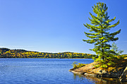 Fall Photos - Pine tree at lake shore by Elena Elisseeva