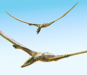 Pterodactyls Prints - Pterosaurs Flying, Computer Artwork Print by Roger Harris