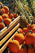 Vegetables Metal Prints - Pumpkins Metal Print by Elena Elisseeva