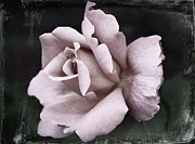 Purple Rose Print by Cathie Tyler