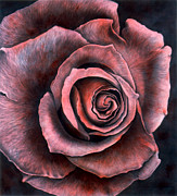 Floral Prints Drawings Posters - Red Rose Poster by Lawrence Supino