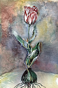 Red Leaves Drawings - Red Tulip by Mindy Newman