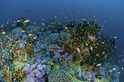 Coral Reef Posters - Reef Scene With Coral And Fish Poster by Mathieu Meur