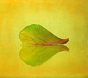 Macro Photography Photos - Reflection by Kristin Kreet