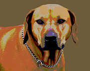 Puppies Digital Art - Rhodesian Ridgeback by Dorrie Pelzer