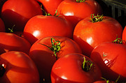 Reflection Harvest Metal Prints - Ripe Tomatoes Metal Print by Connie Cooper-Edwards
