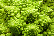 Cauliflower Photos - Romanesco Cauliflower Head by Pasieka