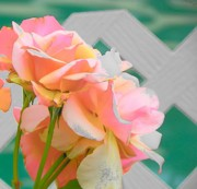 Scottsdale Digital Art - Roses in Scottsdale by Lisa Dunn