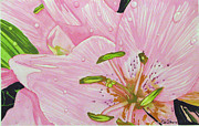 Pink Flower Prints Originals - Rosita  by Debi Singer