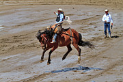Infield Framed Prints - Saddle bronc riding at the Calgary Stampede Framed Print by Louise Heusinkveld