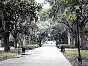 Lamplight Framed Prints - Savannah Framed Print by Mindy Newman