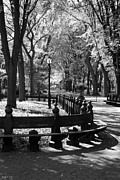 Park Benches Photos - Scenes From Central Park by Rob Hans