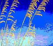 Sea Oats Digital Art Prints - Sea Oats Print by Blaine Filthaut
