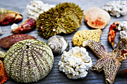 Shells Photos - Sea treasures by Elena Elisseeva