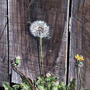 Dandelion Paintings - See You Next Year by Lynette Cook