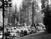 Lodging House Posters - Sequoia National Park Poster by Granger