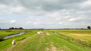 Eemnes Prints - Sheep on a dike in summer Print by Jan Marijs