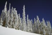 Snow-covered Landscape Photo Framed Prints - Snow-covered Pine Trees Framed Print by Natural Selection Craig Tuttle