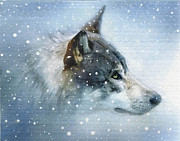 Wolf Digital Art Framed Prints - Snow Eyes Framed Print by Robert Foster