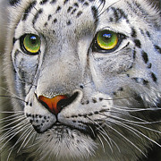 Green Eyes Posters - Snow Leopard Poster by Jurek Zamoyski