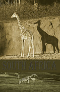 South Africa Digital Art Prints - South Africa Print by Robert Meanor