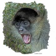 Spider Digital Art Posters - Spider Monkey Poster by Larry Linton