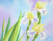 Watercolor Framed Prints - Springtime Yellow Irises Framed Print by Kathryn Duncan