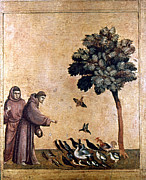 Feed Prints - St. Francis Of Assisi Print by Granger