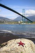 Star Fish Framed Prints - Starfish Stanley park Vancouver Framed Print by Pierre Leclerc