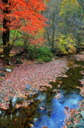 Mountain Stream Photo Posters - Sugar Maple Birch River Poster by Thomas R Fletcher