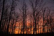 Forest Photographs Prints - Sunset Print by Juan  Silva