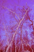 Digitally Altered Prints - Surreal Woods Print by Bob Mintie