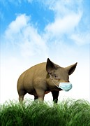 Porcine Animal Framed Prints - Swine Flu, Conceptual Image Framed Print by Victor Habbick Visions