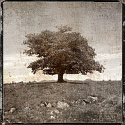 Texture Landscapes Prints - Textured tree Print by Bernard Jaubert