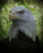 Patriot Photography Prints - The American Bald Eagle - Lee Dos Santos Print by Lee Dos Santos