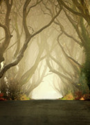 Dark Framed Prints Posters - The Dark Hedges Poster by Pawel Klarecki
