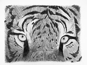 The Tiger Drawings - The Eyes of the Tiger by Luca Rosa